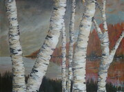 Cottage Birch 3'x4'